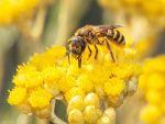 2020.05.21 UE przyjmuje strategie na rzecz bioroznorodnosci foto