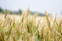 Nowe inicjatywy UE dla wzmocnienia rolnictwa ekologicznego foto
